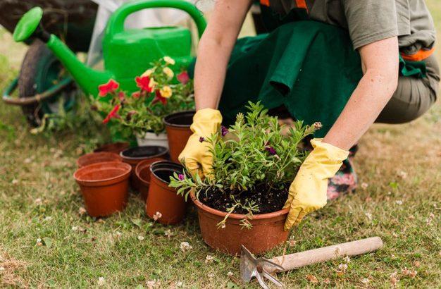 Skrb za okrasno rastlinje